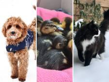 Hoe bescherm je je hond en konijn tegen de ijzige vrieskou? Deze tips van experts helpen jou!