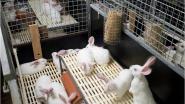 """Protest tegen Week van het Konijn: """"Omstandigheden waarin de dieren worden gekweekt zijn choquerend"""""""