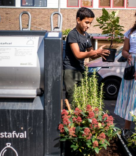 Plantjes rond containers tegen de rotzooi zijn leuk, maar ook duur: 'Sedum is onderhoudsvriendelijk en goedkoper'