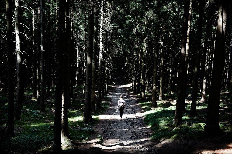 Verslaggever Sterre Lindhout wandelt door de Harz. Beeld Daniël Rosenthal