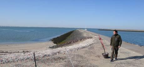 Idyllisch strandje aan de Oosterschelde is voor de bontbekplevier: 'Ze hebben hun rust hard nodig'