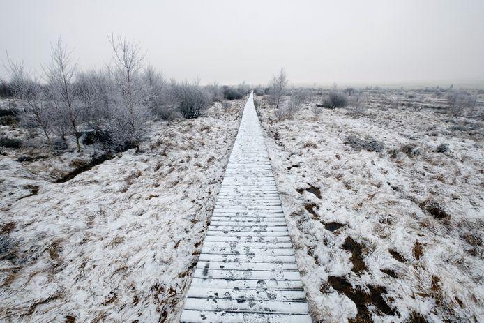 Ook begin februari lag er een mooie sneeuwlaag op de Hoge Venen.