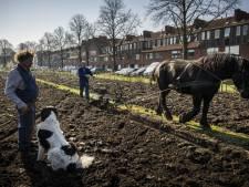 Boeren, stugge mensen en aardbevingen? Zo denken mensen van buitenaf écht over Groningen