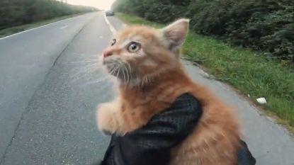 Deze motard redt het leven van jong katje dat verdwaald is op autosnelweg