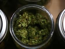 Interpellé après avoir proposé du cannabis à un policier