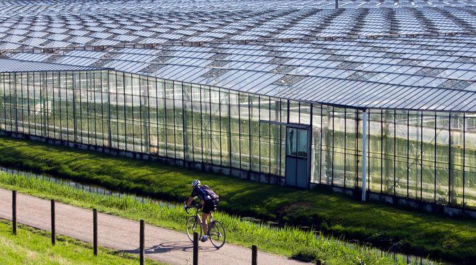 Met lekker weer fietsen tussen de kassen in 's-Gravenzande.