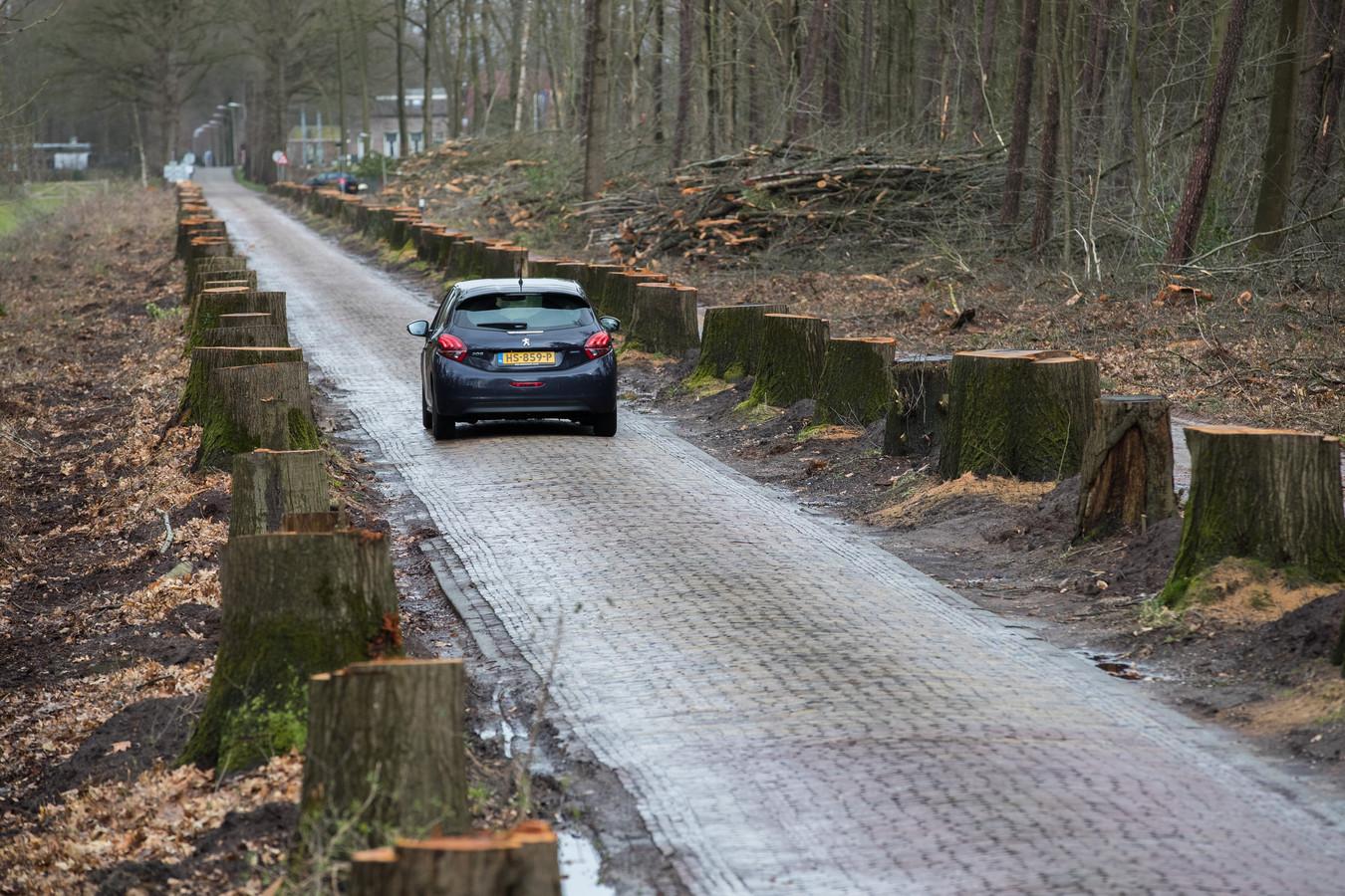 Zo'n honderd eikenbomen zijn gekapt langs Het Nijenhuis richting museum de Fundatie.