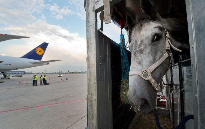 Een paard staat in een transportbox op het vliegveld in Frankfurt te wachten op zijn vervoer naar Teheran.