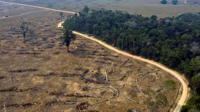 Europese supermarkten dreigen met boycot Braziliaanse landbouwproducten