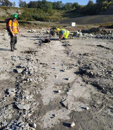 Grote sporen van miljoenen jaren oud dier ontdekt in steengroeve Winterswijk: 'Geweldige vondst'