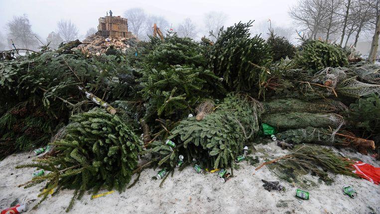 In Noord droppen bewoners hun bruinige en naaldloze den of spar het liefst in Floradorp. Beeld anp