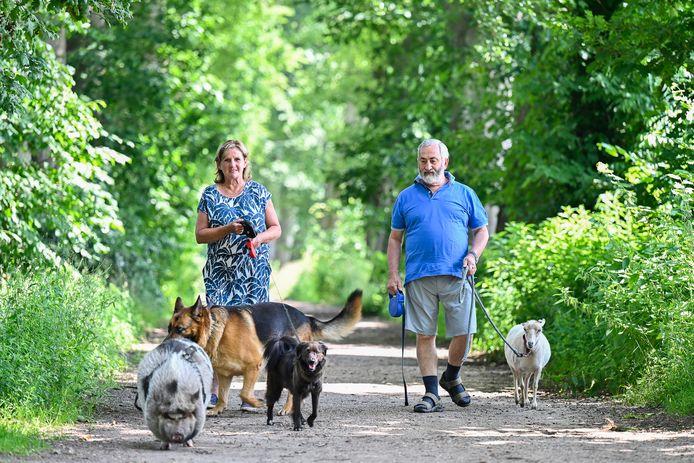 Maria en Jef uit Westmalle gaan geregeld wandelen met beestrijk gezelschap in de bossen rond de trappistenabdij. Hangbuikzwijn Knor, schaap Liesje en Duitse herder Dax zijn hun vaste compagnons. De Roemeense straathond Figo is eigenlijk van hun kleinkind