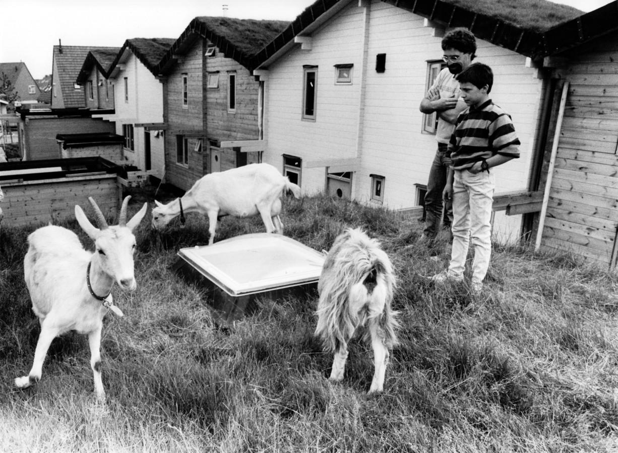 De geiten op de grasdaken trokken veel aandacht. foto Felix Janssens