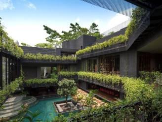 En dat midden in de stad: tropische tuin met zwembad roept sfeer van de jungle op
