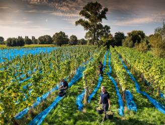 """Nieuwe zomerbar geopend op Gents wijndomein: """"Gentenaars hoeven niet naar het zuiden om te genieten van een zuiderse sfeer"""""""