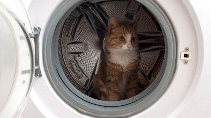 Brusselse brandweer rukt uit... voor kat in wasmachine