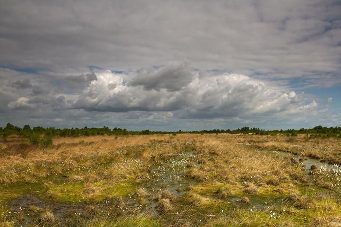 De winnende foto van natuurgebied Engbertsdijksvenen.