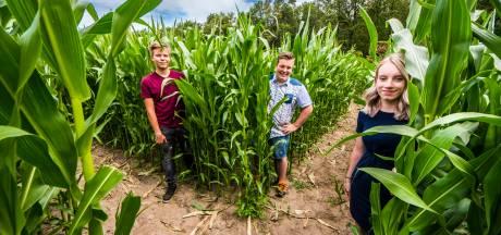 Een zomer lang dwalen door maisdoolhof in Buurse