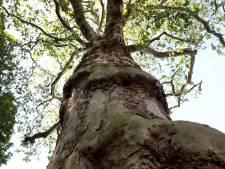 Waarom bomen en de 50-jarige Bomenstichting onmisbaar zijn