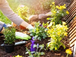 Aménagement de jardins ? Voici les 5 principales erreurs !