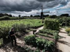 Windmolens in Bronckhorst: lager en maar op één plek
