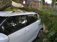 Gevaarlijke boom laat al vier keer een tak vallen en gaat nu om: 'Door 'takje' raakte mijn auto total loss'