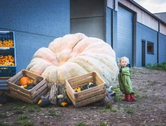 Landelijke Gilde Gits (her)lanceert reuzenpompoenwedstrijd