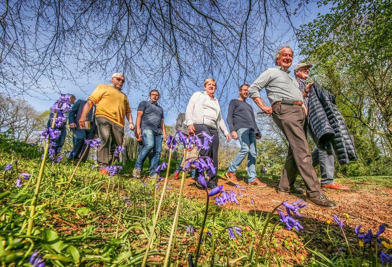 De wandeling  'Het meisje van het kasteel' passeert op plaatsen waar de hyacinten in bloei staan.