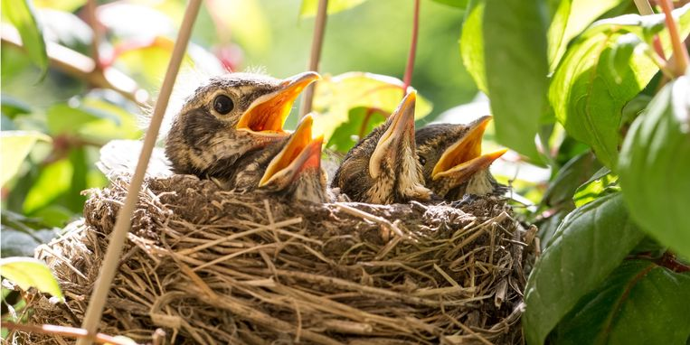 vogels-eieren-leggen-in-jouw-tuin.jpg