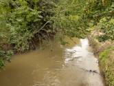 Des actions sont menées pour sauver les poissons du Démer et de la Dyle