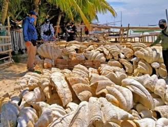 200 ton doopvontschelpen met waarde van 21 miljoen euro in beslag genomen op Filipijnen
