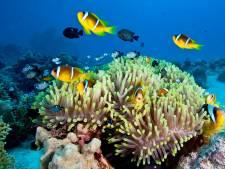 L'existence des mignons poissons clowns menacée par la lumière artificielle