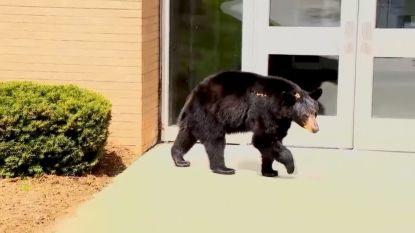 Deze beer lapt de maatregelen aan zijn laars en gaat op wandel