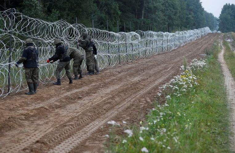 Poolse soldaten bouwen een hek aan de grens met Belarus, dat migranten naar de grens stuurt uit wraak voor Europese sancties. Beeld REUTERS