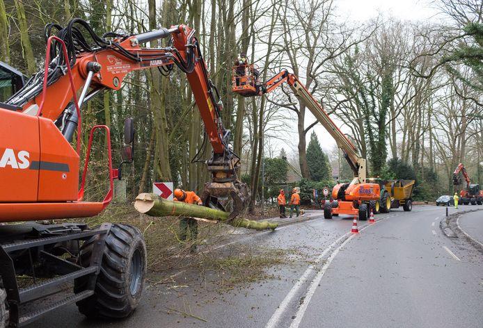 Bomenkap langs de Heerderweg bij de Norelbocht. foto; Hans van de Vlekkert