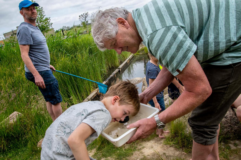 De 6-jarige Guus Broeders uit Tilburg bestudeert zijn 'slootjesdieren'.