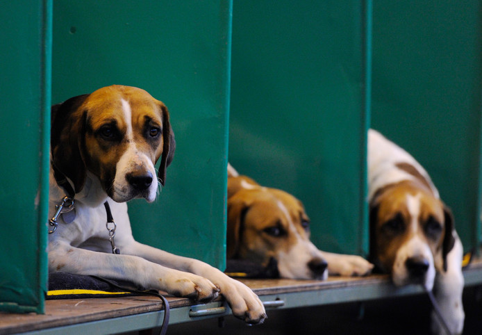Animal Rights demonstreert in Den Bosch tegen proeven met Beagles