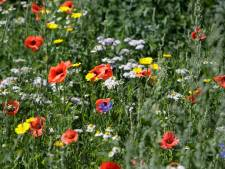 Geertruidenberg maait minder voor meer bloemetjes en bijtjes