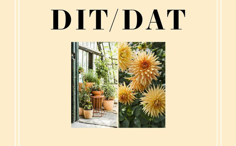 L32_Stem mee: wordt het DIT of DAT? Beeld L32_Stem mee: wordt het DIT of DAT?