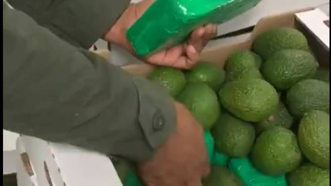 Lading avocado's verbergt 1,5 ton cocaïne voor Antwerpen