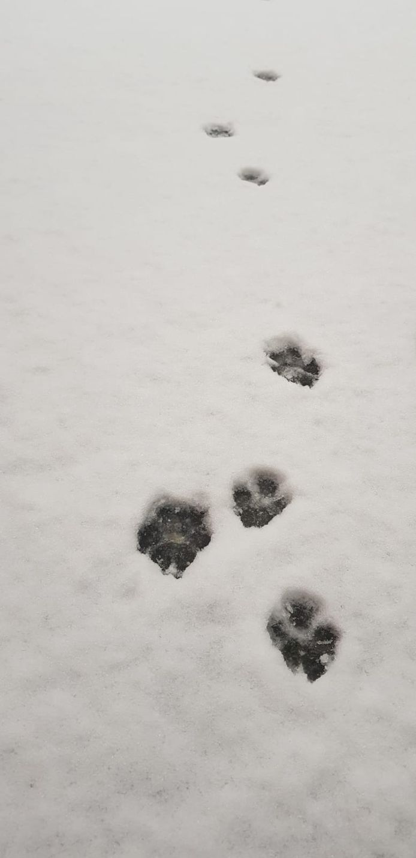 Spink is Den Dungen op speurtocht door de sneeuw.
