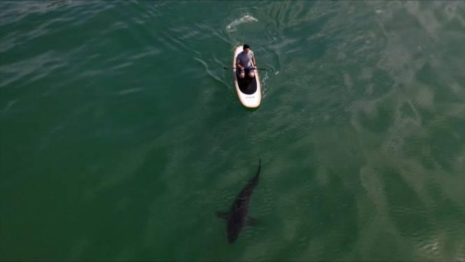 """Hier kan je vrij zwemmen tussen 'ongevaarlijke' witte haaien: """"Ze lijken niet geïnteresseerd"""""""