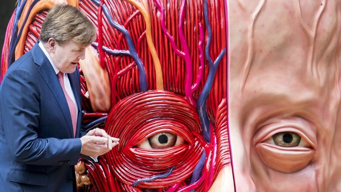 Koning Willem-Alexander opende vrijdagmiddag de kunsttentoonstelling Sonsbeek '16 door zelf de handen uit de mouwen te steken.