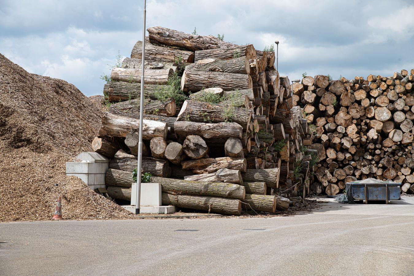 Hout is de grondstof voor de biomassacentrale.