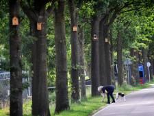 Groesbeek deed een proef met koolmeesjes in de strijd tegen de eikenprocessierups, en zo liep dat af