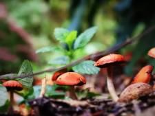 Oproep: deel met ons je mooiste herfstfoto's in het Groene Hart