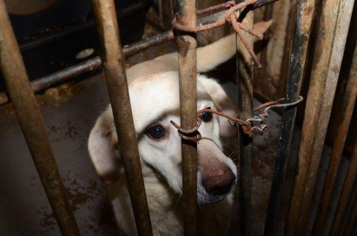 Honderd honden in beslag genomen bij hondenfokker Deventer