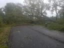 In de Jaak van Buggenhoutlaan en Middenlaan in Koksijde kwamen bomen op de weg terecht.