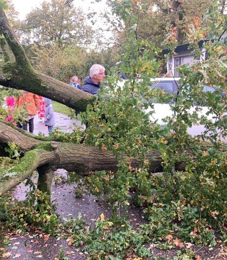 Camping in Zelhem getroffen door windhoos: 'Metersdikke boom viel recht op het dak van een chalet'