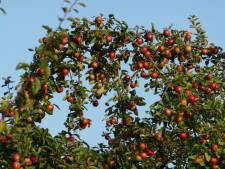 Goirlese fruitteler maakt zich geen zorgen om nachtvorst: 'Als je je maar voorbereidt'